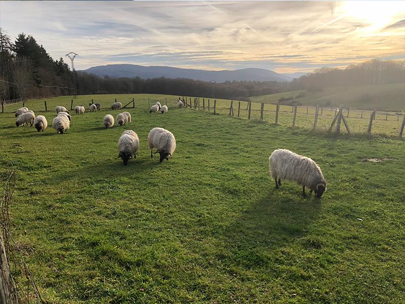 Los pastizales en Roncesvalles.