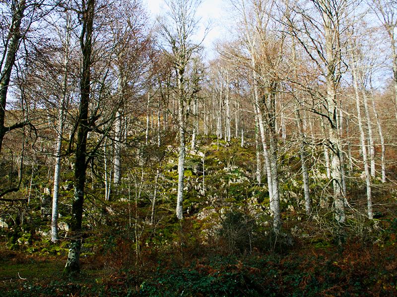 Pirineo navarro: Selva de Irati