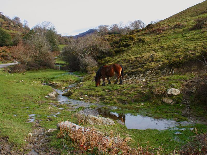 Pirineo navarro: Selva de Irati.