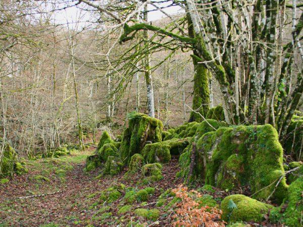 Selva de Irati.